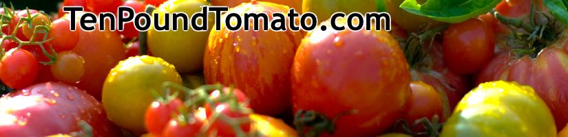 Ten Pound Tomato